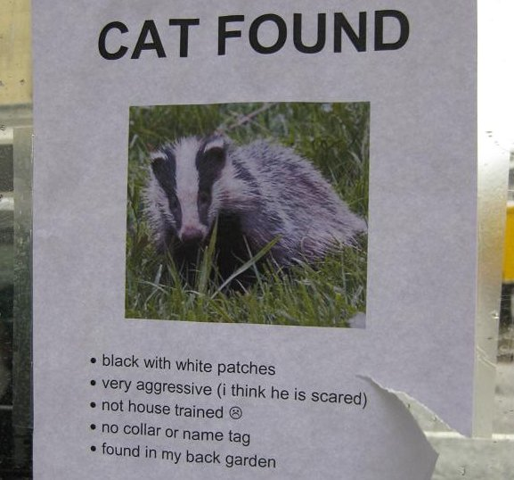 badger-found-4