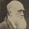 Darwin Square