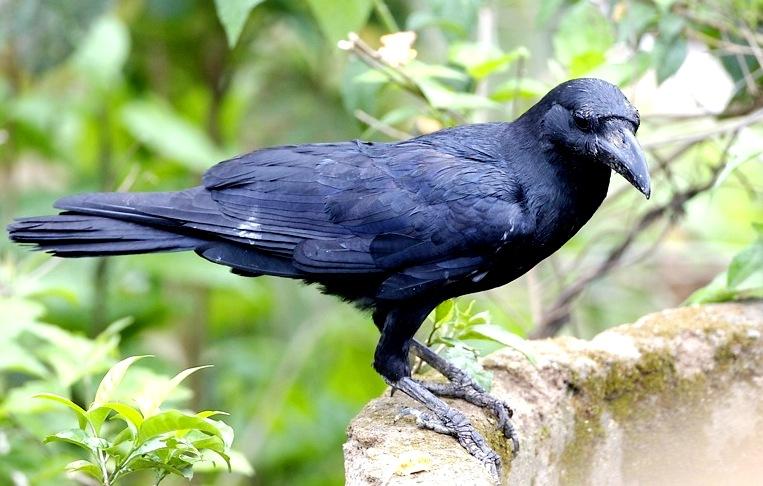 bird-brain-2