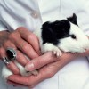 openness-animal-research