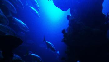 flickr Olly Coffey underwater 1024w 6474261405_c71d4c6046_b
