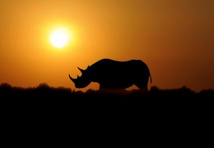 Black rhino dawn Ray Morris1 6149870420_ae31345456_b