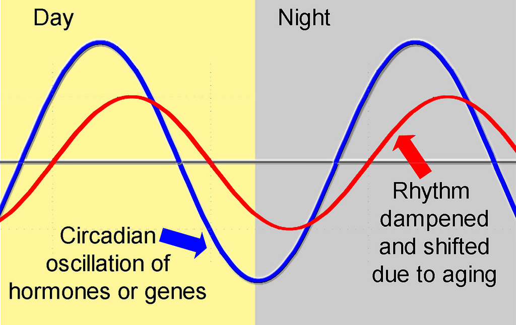 discuss the disruption of biological rhythms What are biological rhythms  to that rhythm, to make it clear when we're  discussing the biological rhythm  circadian rhythm disruptions.