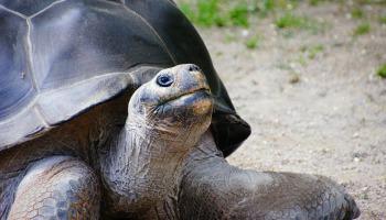 turtle-226289_1280