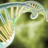 DNA shutterstock_146497481