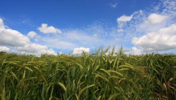 crops_Tom_3623153374_cc4e8eba62_o